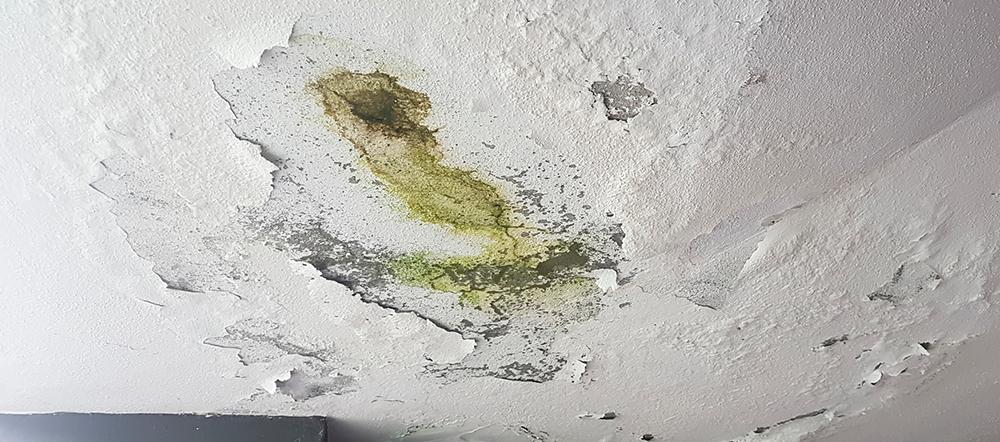 mold remediation